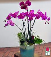beretania florist premium 5 stem orchid planter honolulu orchid delivery
