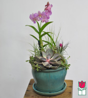 The BF Orchid with Succulent