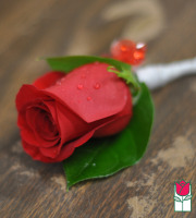 Boutineer - Single Red Rose