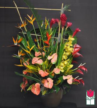 The BF Kinau Tropical Arrangement