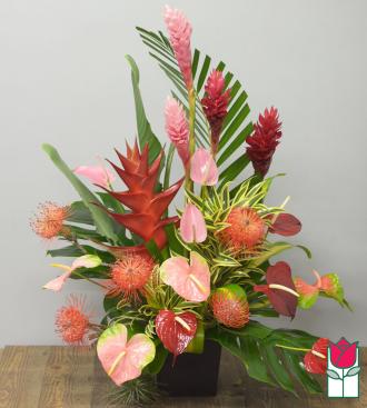 Beretania\'s Exotic Wonders Tropical Premium <b>[Tropical Varieties Vary] </b>