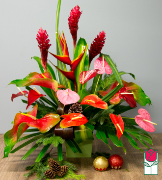 Beretania\'s Blitzen Christmas Tropical