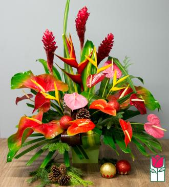 Beretania\'s Dasher Christmas Tropical