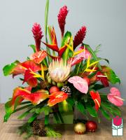 Beretania's Prancer Christmas Tropical
