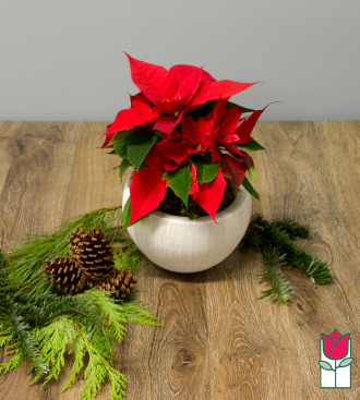 [SOLD OUT] The BF Red Poinsettia Basket (Extra Large)