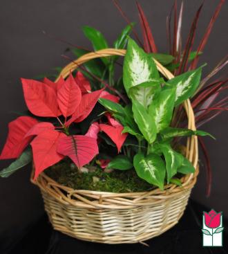 The BF Festive Christmas Dish Garden