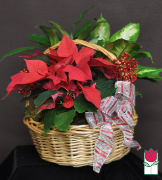 [SOLD OUT] The BF Tropic Christmas Dish Garden