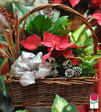 The BF Joyful Christmas Dish Garden