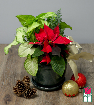 beretania florist chestnut dish garden honolulu hawaii plant delivery christmas gifts