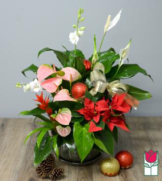beretania florist fruit cake dish garden honolulu hawaii plant delivery christmas gifts