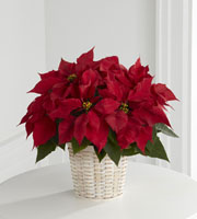 The FTD� Red Poinsettia Basket (Small)