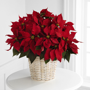 The FTD® Red Poinsettia Basket (Large)