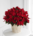 The FTD� Red Poinsettia Basket (Large)