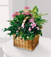 Send blooming and green plants to the home, funeral home or business for sympathy in the Greater Grand Rapids Mi area and world wide with Sunnyslope Floral