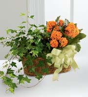 The FTD� Kalanchoe & Ivy Planter
