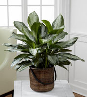 The FTD� Chinese Evergreen