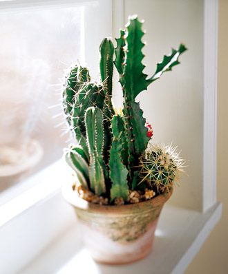 The FTD® Cactus Garden