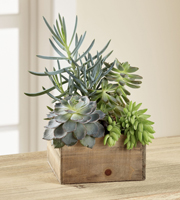 The FTD® Southwest Sophistication™ Dishgarden