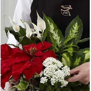 The FTD® Florist Designed Plants in a Basket