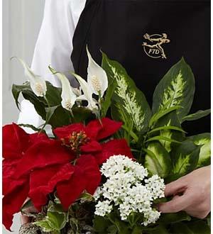 Plantes dans une corbeille du fleuriste de FTD®
