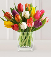 15 Stem Mixed Tulips with Glass Vase