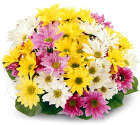 Mixed Daisy Bouquet - Wrapped