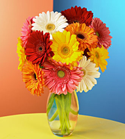 Gerbera Daisy Bouquet with Clear Glass Vase