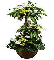 Plante Royale avec Fleurs