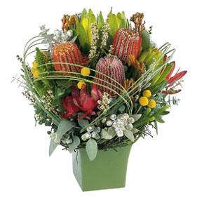 FTD Florist Flower and Gift Delivery Australian Native Flower