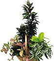 Arrangement de plantes
