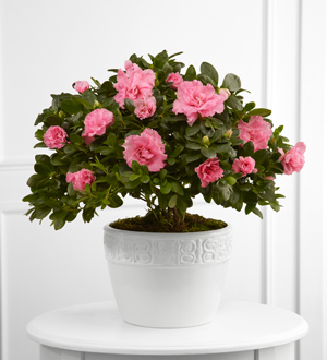 The FTD® Vibrant Sympathy™ Planter - Cleveland Ohio