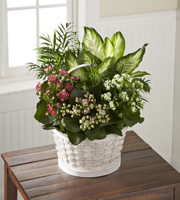 The FTD� Rural Beauty� Dishgarden