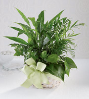 The FTD� Woodland Greens� Basket