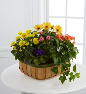 The FTD® Gentle Blossoms™ Basket - Cleveland Ohio