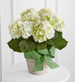 The FTD® White Hydrangea Planter