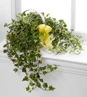 The FTD® Solace™ Ivy Planter