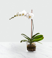 The FTD� White Orchid Planter