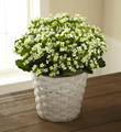 The FTD� White Kalanchoe