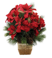 Natural Poinsettia