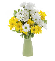 Send Vase of DAISES Today to Ada, Caledonia, Grand Rapids, Grandville, Hudsonville, Jenison, and more with Sunnyslope Floral