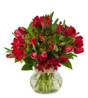 Tulip Supreme