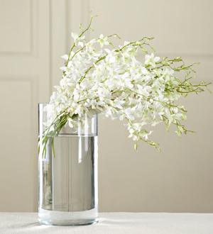 The FTD® White Dendrobium Bouquet
