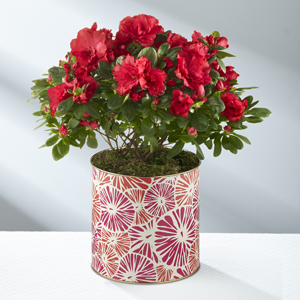 About Bloomin\' Time Spring Azalea - BETTER