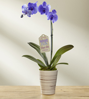 The FTD® Live Big Mother's Day Orchid by Hallmark