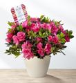 The FTD® Love, Strength, & Happiness Mother's Day Azalea by Hallmark