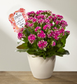 The FTD® Love Defined Mother's Day Kalanchoe by Hallmark