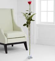 The Ultimate Rose - Single Stem 4-Foot Rose - VASE INCLUDED