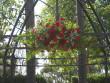 Arbor of love