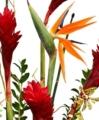 Florist Designed Tropical