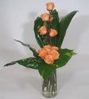 Roses Nouveau